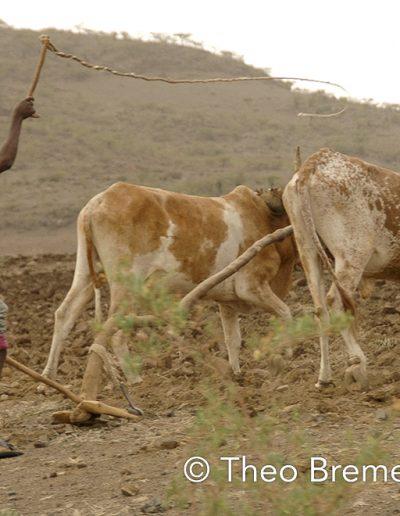 Tigrayan John Deer